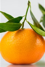 Tangerine, citrus, fruit, hazy