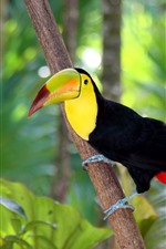 Preview iPhone wallpaper Toucan, beak, bird, forest