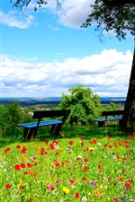 Preview iPhone wallpaper Tree, green grass, many flowers, bench, spring