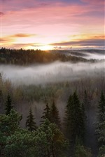 Preview iPhone wallpaper Trees, fog, top view, sky, sunrise, autumn