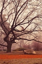 Preview iPhone wallpaper Trees, twigs, fog, morning, autumn