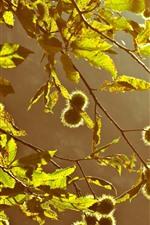 Twigs, leaves, back light, sunshine
