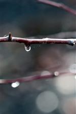 Galhos, gotas de água, nebulosos