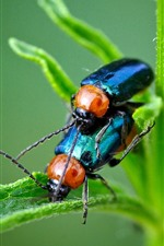 Preview iPhone wallpaper Two beetles, green plants