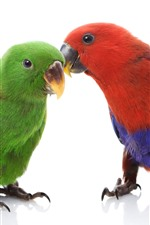 Preview iPhone wallpaper Two parrots, colorful feathers, white background