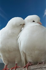 Preview iPhone wallpaper Two white doves, couple, tulips, blue sky