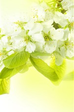Preview iPhone wallpaper White apple flowers, green leaves, hazy background
