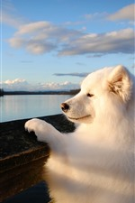 White dog look the river