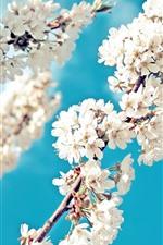 iPhone壁紙のプレビュー 白い桜、花が咲く、小枝、青い空、春