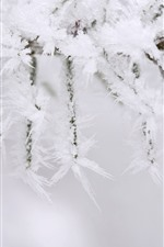 Preview iPhone wallpaper Winter, twigs, ice crystal, snow