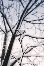 Preview iPhone wallpaper Winter, twigs, snow, tree, cold