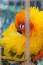 Preview iPhone wallpaper Yellow feather parrot sleep in cage
