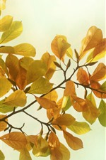 Preview iPhone wallpaper Yellow leaves, twigs, glare, hazy