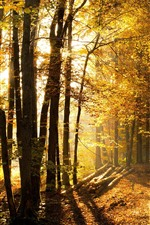 Preview iPhone wallpaper Autumn, sun rays, light, path, trees