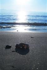 Beach, sea, people, sun