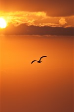 Bird flying in sky, sunset, clouds