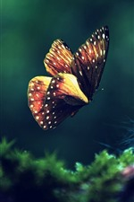 Preview iPhone wallpaper Butterfly flying, green grass