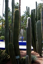 Cactuses, thorn, tropical