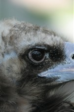 Preview iPhone wallpaper Eagle, beak, eye
