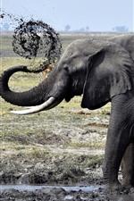 Elephant, dirt