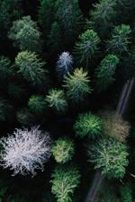 Wald, Bäume, Straße, Draufsicht