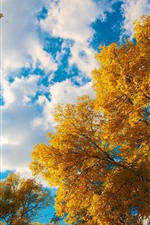 Preview iPhone wallpaper Golden autumn, trees, leaves, sky, white clouds