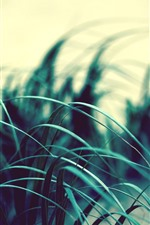 Preview iPhone wallpaper Grass leaves, wind, dusk