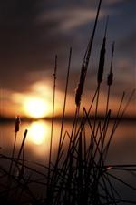 Grama, juncos, lago, pôr do sol