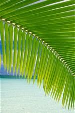 Зеленые пальмовые листья, пляж, тропический, море