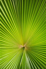 Preview iPhone wallpaper Green palm tree leaf, sector