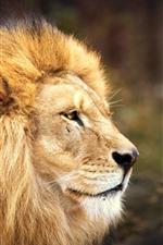 Leão, rosto, manue