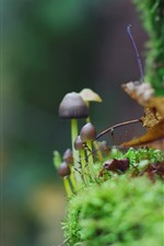 Preview iPhone wallpaper Little mushroom, green moss