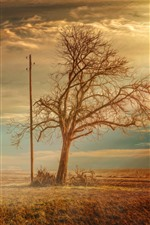 Preview iPhone wallpaper Lonely tree, power lines, fields, sunshine