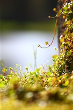 Preview iPhone wallpaper Moss, plants, hazy