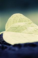 One green leaf, texture, ground