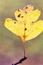 One yellow leaf, twigs, hazy