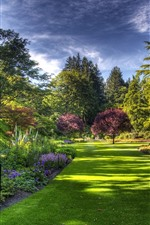 Park, lawn, trees
