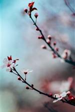 iPhone壁紙のプレビュー ピンクの桜の花、小枝、春