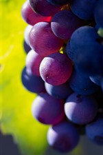 Purple grapes, delicious fruit