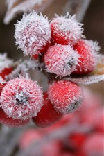 Preview iPhone wallpaper Red berries, snow, frost, winter