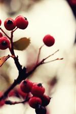 Red berries, twigs, leaf, hazy