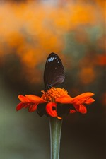 Red flower, petals, black butterfly