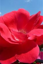iPhone壁紙のプレビュー 赤いバラのクローズアップ、花びら、青い空