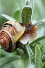 Preview iPhone wallpaper Snail, green plants leaves