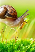Preview iPhone wallpaper Snail walking on grass