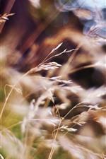 Preview iPhone wallpaper Summer, grass, hazy
