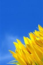 Preview iPhone wallpaper Sunflower, blue sky, moon