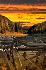 Sunset, trees, river, clouds, wood