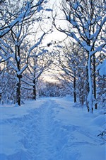 Preview iPhone wallpaper Sweden, trees, thick snow, winter