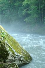 Trees, river, stone, fog